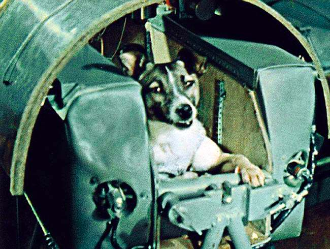 Mourir pour la science des hommes Laika_first_living_being_in_space_gr
